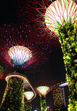 Night Garden by the bay tree2 Royalty Free Stock Photo