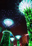 Night Garden by the bay tree3 Stock Photo