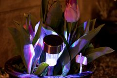 Night Garden, planter lit by solar garden lamp stock photo
