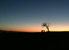 The night has arrived and the tree says goodbye to the day. The night has arrived and the tree says goodbye stock images