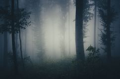 Night in haunted forest with blue fog Stock Image