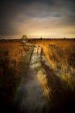Night at Heathland. Painterly scene of heathland at National Park Veluwezoom, The Netherlands Stock Photography