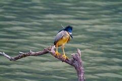 Free Night Heron Stock Photos - 44032143