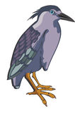 Night Heron or Nycticorax sp., illustration Royalty Free Stock Photography