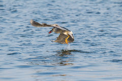 Is night heron to catch fish Royalty Free Stock Photo