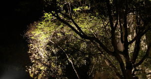 Night Horror effect shot of tree stock video footage