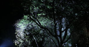 Night Horror effect shot of tree stock footage