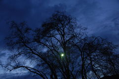 Night Horror effect shot of tree Royalty Free Stock Photo