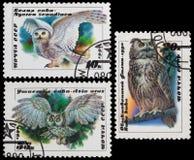 Night Hunter - owl Stock Image