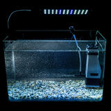 Night illuminated glass aquarium with lamp and air bubbles Royalty Free Stock Photo