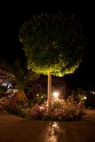 Night illumination of garden Stock Photography