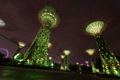 Night illumination in Gardens by the Bay, Singapore Royalty Free Stock Photos