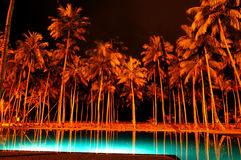 Night illumination of swimming pool and palms Royalty Free Stock Image