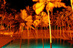 Night illumination of swimming pool and palms Stock Images