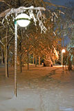Night illumination in winter park, seasonal environment, Royalty Free Stock Photos