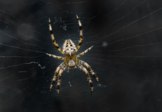Night image of very dreadful spider. On his net in the darkness Stock Images