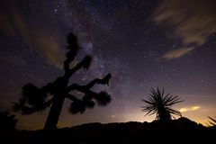 Night in Joshua Tree National Park Royalty Free Stock Photo