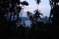 Night in the jungle. Peeking at the Brazilian coastline through the jungle royalty free stock photo