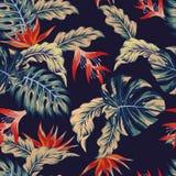 Night jungle seamless pattern Stock Image