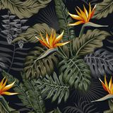 Night tropical seamless pattern plants and flowers Royalty Free Stock Photos