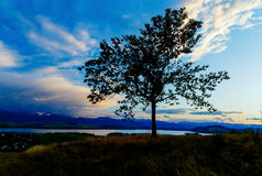 Night lake and Tree with dark blue sky Royalty Free Stock Photography