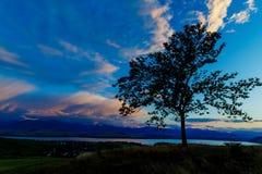 Night lake and Tree with dark blue sky Stock Photos
