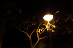 night lamp tree royalty free stock images