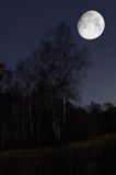 Night landscape. Night scenery of forest with Moon Royalty Free Stock Images