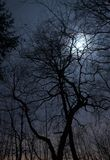 Night landscape. Night scenery of forest with Moon stock photography
