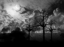 Night  landscape. 3 d graphics night fantasy landscape with  trees Royalty Free Stock Image