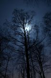 Night landscape. Night scenery of forest with Moon stock photo