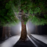 Night landscape. Beautiful Christmas night in the forest Stock Photos