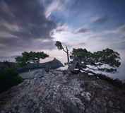 Night landscape with beautiful tree at mountains with moonlight Royalty Free Stock Photography