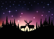 Night landscape with forest, deer and pine Stock Images