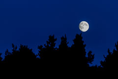 Night landscape with forest silhouette. And moon on blue sky stock photography