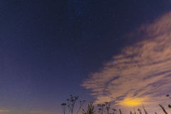 Night landscape with herbs, stars and clouds Royalty Free Stock Photos