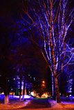 night landscape with lighting decoration on trees Royalty Free Stock Photo