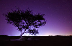 Night landscape in long exposure, tree in the desert and stars background Royalty Free Stock Image
