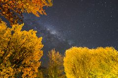 Milky way with autumn foliage in Queenstown, South Island, New Zealand. Night landscape milky way with forest foreground. Autumn season, New Zealand, long stock image