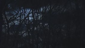 Dark Night In A Forest stock video