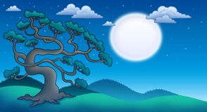 Night landscape with old pine tree Royalty Free Stock Photos