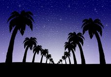 Night landscape with palm trees in a row on a sandy country with deep blue night sky with luminous stars in the starry sky with wh. Ite glow in the middle of the vector illustration