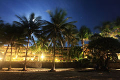 Night landscape with palm trees Stock Photography