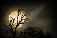 Night landscape of sky with bright super moon behind silhouette royalty free stock photos