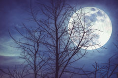 Night landscape of sky with bright super moon behind silhouette. Night landscape of sky and super moon with bright moonlight behind silhouette of dead tree stock images