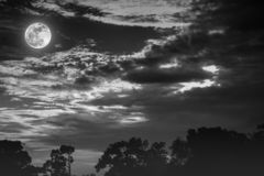 Night landscape of sky with cloudy and full moon above silhouettes of trees. Serenity nature background in gloaming time. Black royalty free stock image
