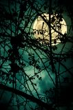 Landscape of sky with super moon behind silhouette of tree branch. Night landscape of sky and super moon with bright moonlight behind silhouette of tree branch stock photo