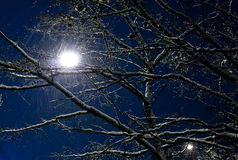Night landscape with snowfall Stock Image