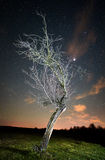 Night landscape with tree Stock Photo