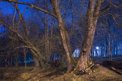 Night landscape with trees and bluу street lamp Royalty Free Stock Photo